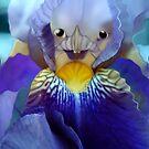 The Dauphina:  Princess Iris by Merilyn