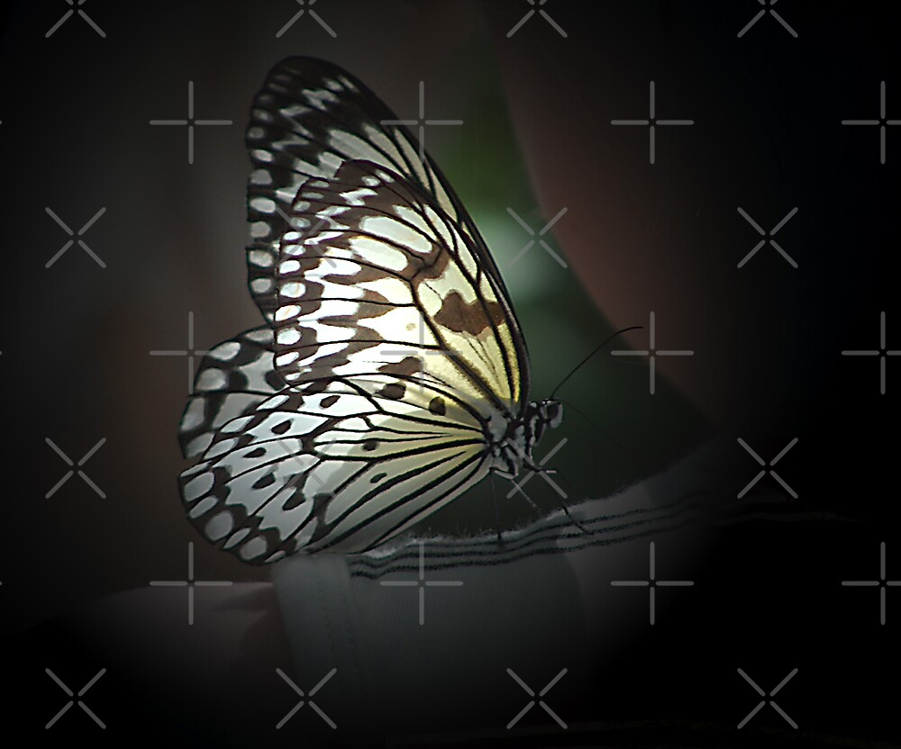 Light Wings by Maria Dryfhout