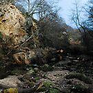 Beck Hole/ fallen tree by dougie1