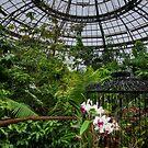Tropischer Wintergarten von Celeste Mookherjee