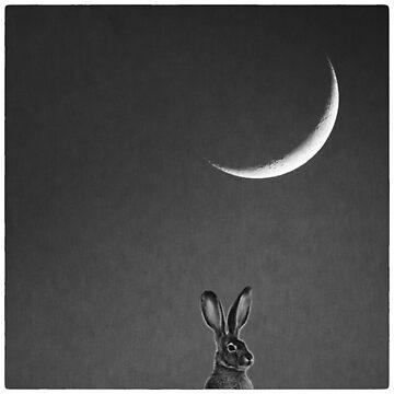 Jackrabbit Moon by pberggr1