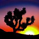 Joshua Tree Sunset by Peter B