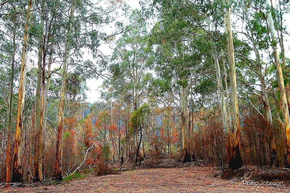 Survivors - Mount Buller National Park, Victoria Australia by Philip Johnson