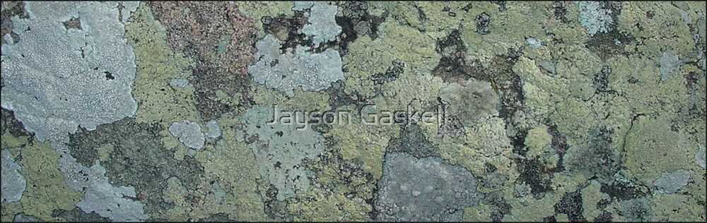 I Lichen This by Jayson Gaskell