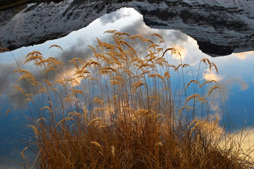 Skyweeds by Don Guindon