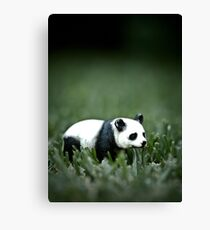 Panda - Forced Perspective - Toy Canvas Print