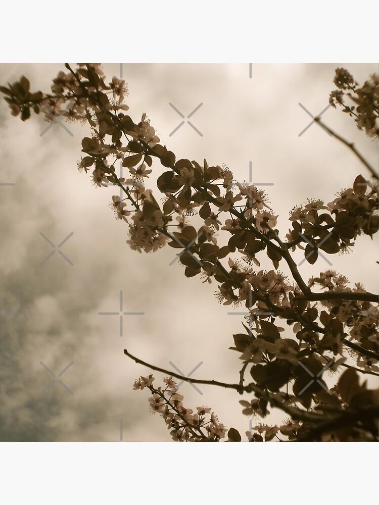 Faded Blooms by OneDayArt