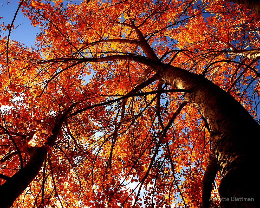 Quot Autumn Tree Quot By Annette Blattman Redbubble