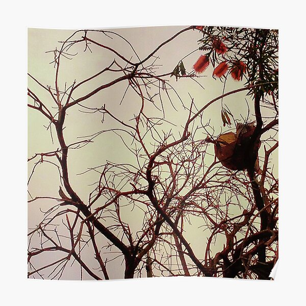 tree 5664 Poster
