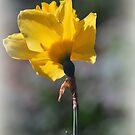 Wistful by Lozzar Flowers & Art