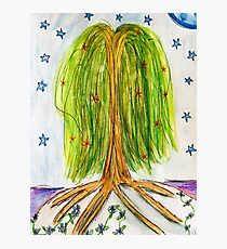 Starry willow Photographic Print