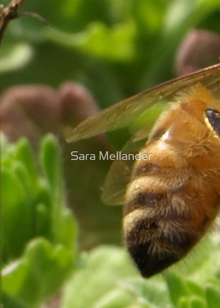 Bee Bottom by Sara Mellander