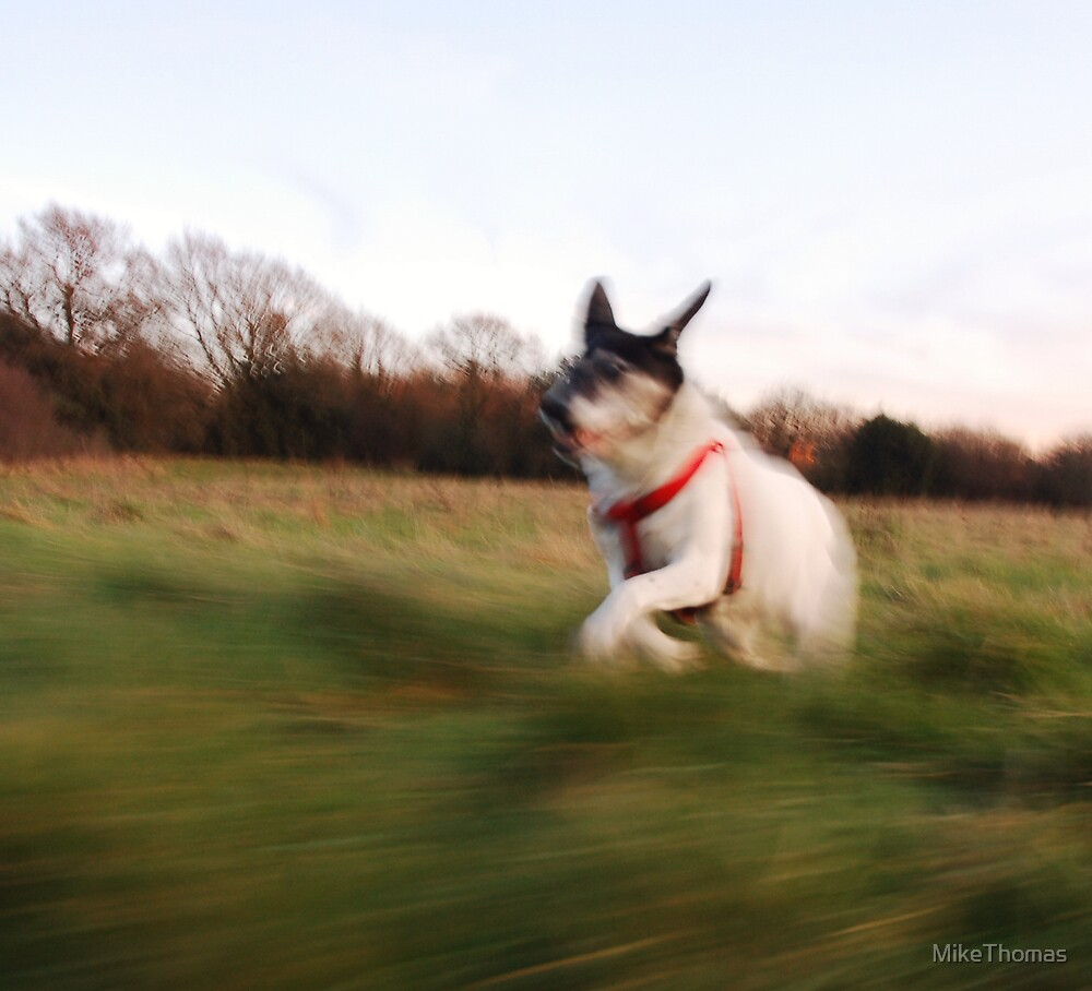 Peggy at speed by MikeThomas