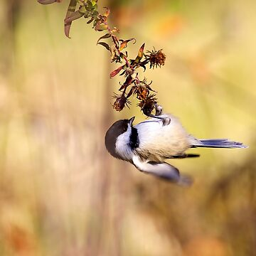 The Little Acrobat by EugeJ
