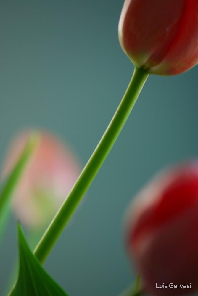 Tulips1 by Luis Gervasi