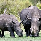 SIDE BY SIDE - MOTHER & BABY - White Rhinoceros - Ceratotherium sumum -WIT RENOSTER by Magriet Meintjes