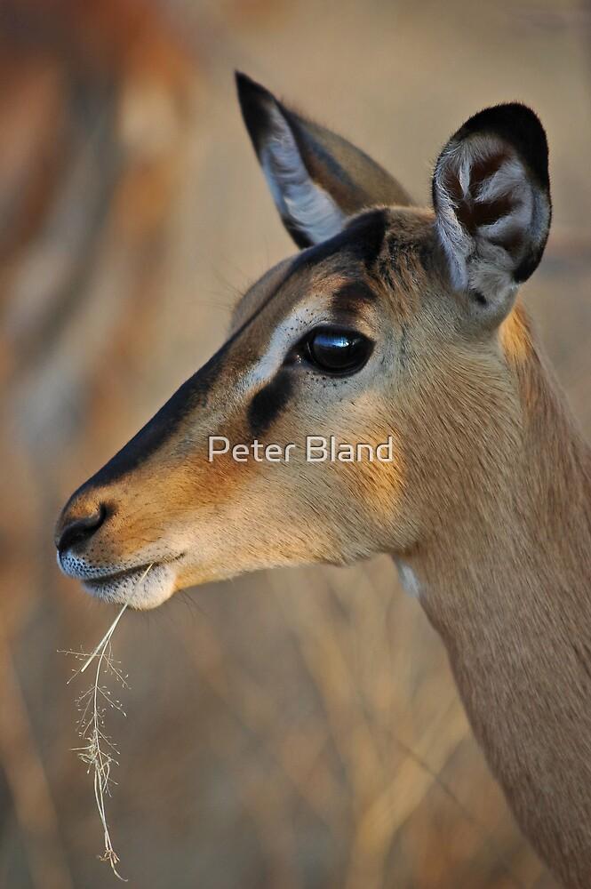Blackfaced Impala by Peter Bland