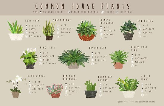 Quot Common House Plants Infographic Quot Poster By Amakiyo