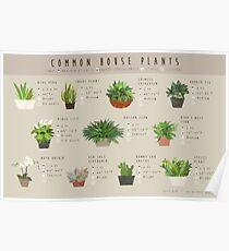 Gemeinsame Hauspflanzen Infographik Poster