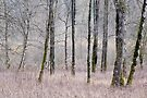 Winter forest by Patrick Morand