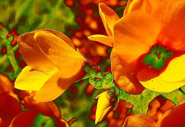 Orange-ness by Caitiebug