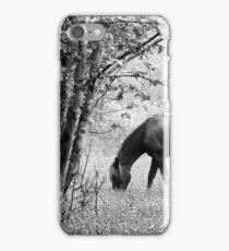 6.6.2017: Horse on Pasture iPhone Case/Skin