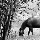 6.6.2017: Horse on Pasture by Petri Volanen