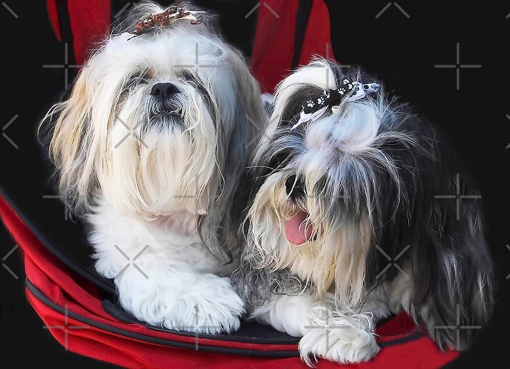 Two Cute!! by Heather Friedman