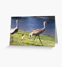 Little Family of Sandhill Cranes Greeting Card