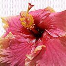 Beautiful Hibiscus by Margaret Stevens