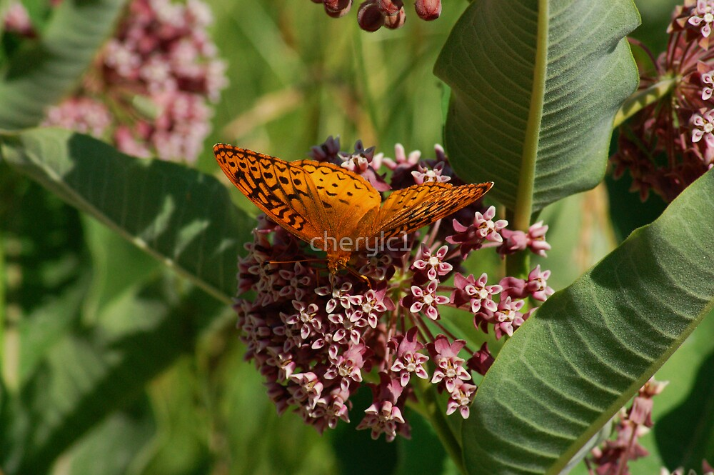 Wings Of Orange by cherylc1