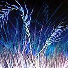 Field of Dreams by Linda Callaghan