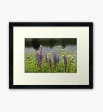 Lupin flowers at a lake Framed Print