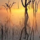 0556 First Rays - Lake Mulwala by Hans Kawitzki