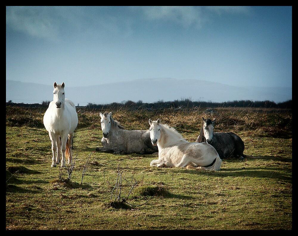 Horses by Gerard  Horan