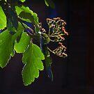 Backlit Buds by Nik Watt