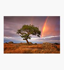 0573 Tree,rocks and rainbow - Dog Rocks Photographic Print