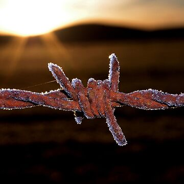 Wire'n'ice by kurrawinya
