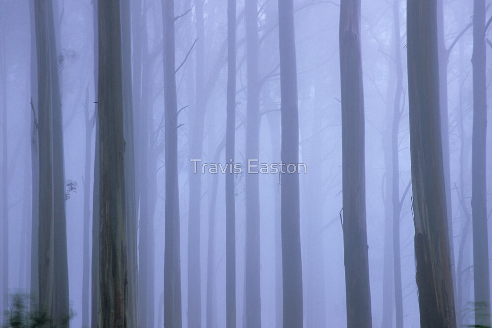 Trees in the mist by Travis Easton