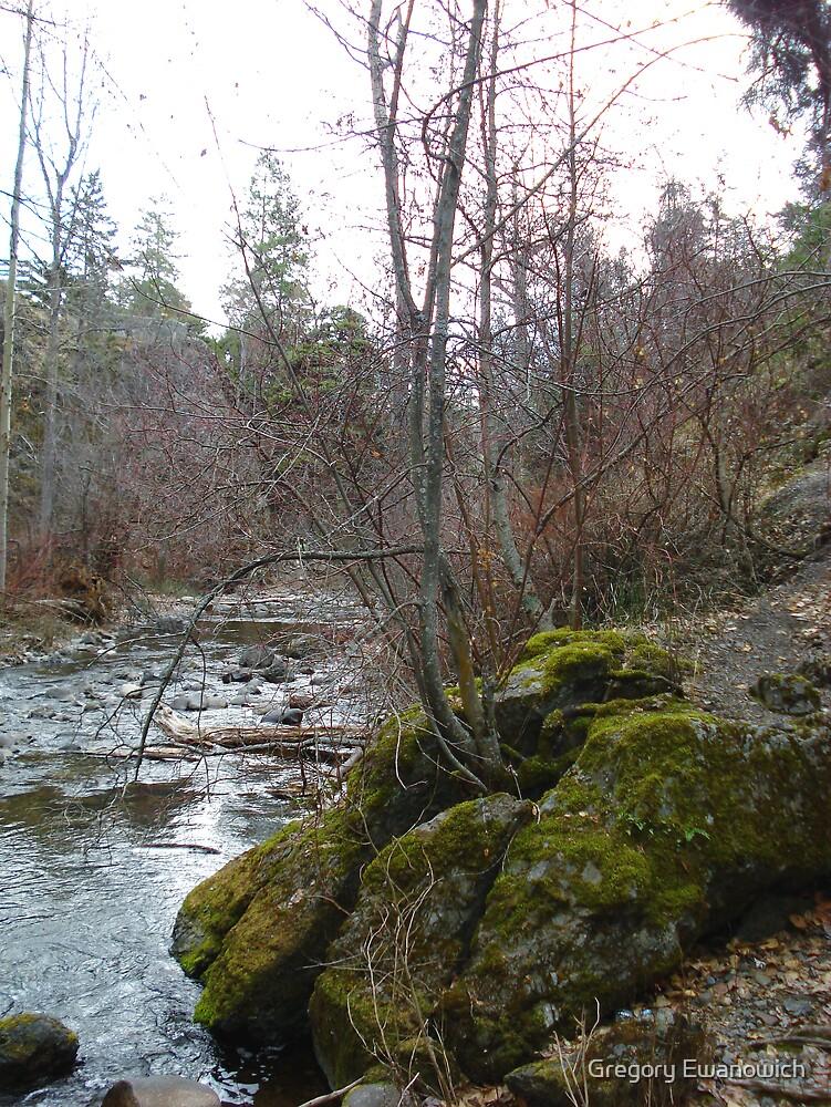 Bear Creek I by Gregory Ewanowich