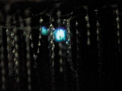 glow worm by judithtaylor