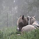 6.6.2017: Horse Friends by Petri Volanen