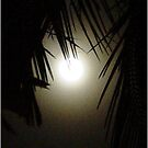 Palm Moon by Jayson Gaskell
