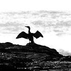 Wind beneath my wings by iamelmana