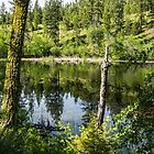 A Pond in the Woods by Bryan D. Spellman