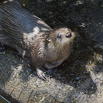 Adorable River Otter by marialberg