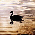 Golden Goose by David Lamb
