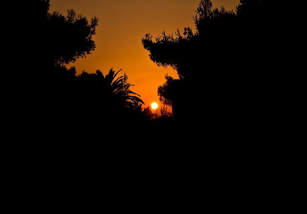 Light Through The Trees by Alan Watt