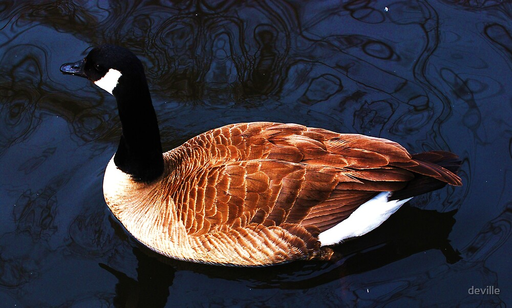 Canadian Goose by deville