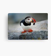 Pinguin Canvas Print